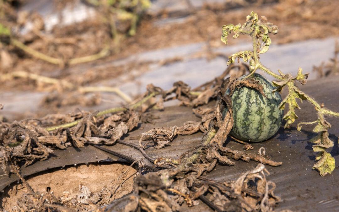 Saltwater Intrusion in Mekong Delta